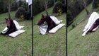 Atlar Nasıl Uyurlar?