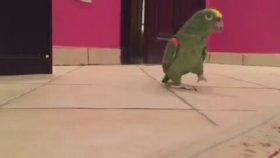 Kötü Adam Kahkahası Atan Papağan