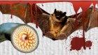 Kan Emerek Yaşayan 8 Vampir Hayvan