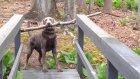 Köpeğin Karşılaştığı Problem Karşısında Pes Etmemesi