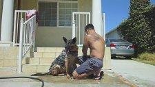 Dog Washing Time (Köpek Banyosu)