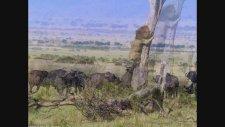 Korkak Aslan Ağaca Tırmandı