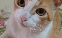 Sahibinin Söylediği Şarkıya Eşlik Eden Sevimli Kedi..