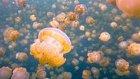 İnanılmaz Bir Dinginlik: Denizanası Gölü