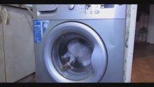 Kediyi Çamaşır Makinesine Atıp Yıkamak