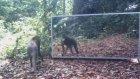 Kendini Aynada İlk Defa Gören Hayvanlar
