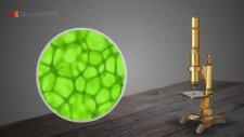 6. Sınıf Fen Bilimleri - Geçmişten Günümüze Hücreyle İlgili Çalışmalar