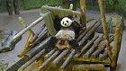 Battaniyesiyle Oynarken Kaydedilen Pandanın Sevimli Anları
