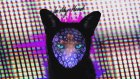 Galantis - In My Head