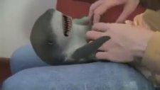 Gıdıklanan bir yavru köpekbalığı mı ?