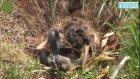 Yılanla Ölümüne Kavga Eden Tavşan