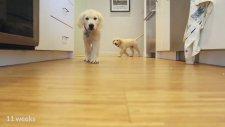 Yemek İçin Koşan Köpeklerin Time Lapse Olarak Büyümelerine Tanıklık Etmek