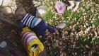 Bebeği Kovalayan Kaplumbağa
