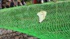 Kuyudan Leopar Kurtarmak (Hindistan)