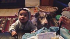 Mama Diyemeyen Bebek Ve Diyebilen Köpek