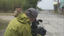 Kameramana Sırnaşan Yavru Kedi
