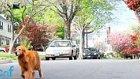 Tasmayı Drone'a Bağlayıp Köpek Gezdirmek