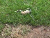 Anne Tavşanın Yılana Dünyayı Dar Etmesi