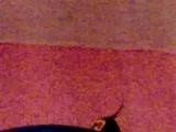 konusan sultan papağanı marsuğun ıslık ve opucuk k