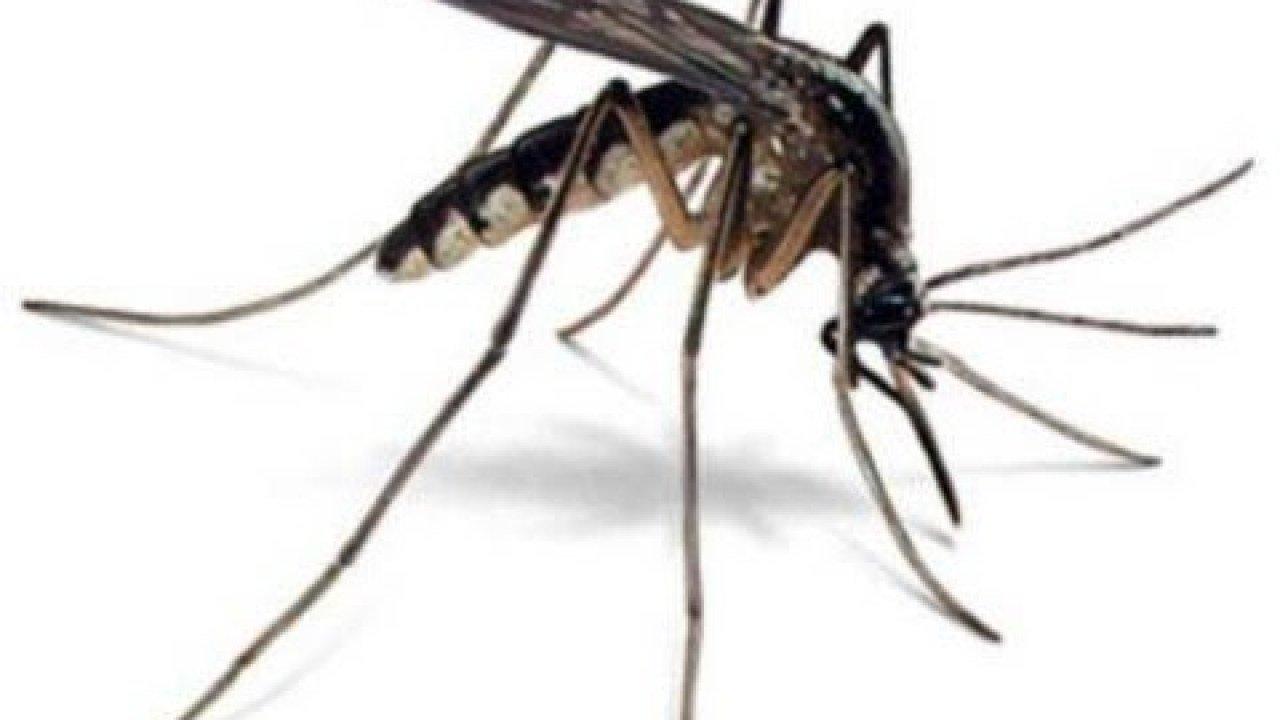 Sivrisinekler Neden Bazı İnsanları Daha Fazla Isırır