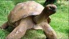 Dünya Tarihinin En Yaşlı 16 Hayvanı