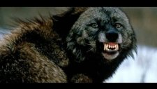 Dünyanın En Tehlikeli 15 Köpek Türü