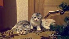 Sırayla esneyen sevimli kedi yavrular