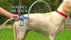 Aşırı Pratik Köpek Yıkama Makinesi