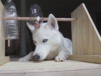 Köpek ve Şişe Oyunu Nasıl Yapılır?