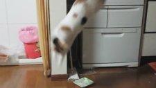 Salatalıktan Korkan Kedi
