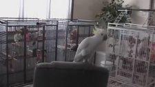 Müziğin Ritmine Kendini Kaptıran Papağan