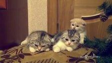 Sırayla Esneyen Sevimli Kediler