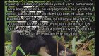En Korkunç 10 Hayvanat Bahçesi Faciası