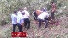 Trabzon'da sahibini öldüren öküz kesildi