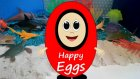Sürpriz Yumurtalar | Deniz Canlıları | Surprise Eggs | Sea Creatures
