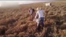 Kendini çoban köpeği zanneden katır