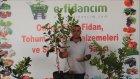 Aşılı Yediveren Limon Ağacı Fidanı Özellikleri Yetiştiriciliği ve Fidan Satışı