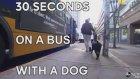 Siyah Labradorun Otobüs Yolculuğu