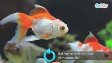 Balıklar Nasıl Ve Ne Kadar Yemlenmelidir?
