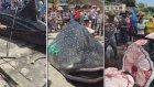 Balina Köpekbalığını Canlı Canlı Kestiler (18)