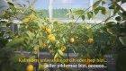 Tora 2014 Yıl Sonu Videosu
