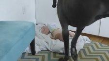 Köpeğe Patronun Kim Olduğunu Öğreten Bebek