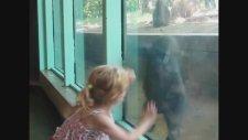 Hayvanat Bahçesinde Çocuk Olmak