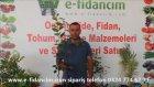 Çikolatalı Trabzon Hurması Cennet Ağacı Fidanı ve Özellikleri