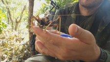ilginç böceğin kana kana su içmesi
