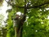 fıçıcılarda ağaç budama