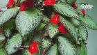 Baharda İç Mekan Bitkilerine Nasıl Bakım Yapılmalıdır?