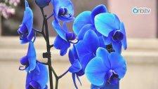 Orkidelerin Bakımı Nasıl Yapılır?