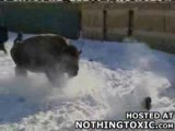 bizon saldırısı