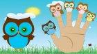 Baykuş Ailesi Finger Family Şarkısı